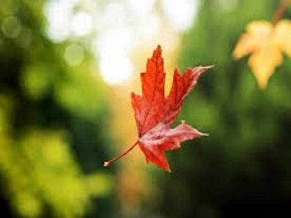 Mơ thấy lá rụng đánh lô bao nhiêu